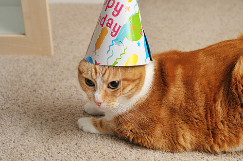 Cats In Birthday Hats Advertisements