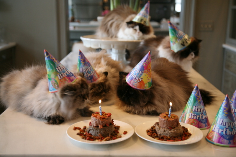 Cats In Birthday Hats